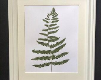 Framed Botanical Art. Real Hand Pressed Ferns Framed. Pressed Botanicals.