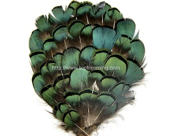 Lady Amherst Pheasant Feather Pad ( 2Pcs)