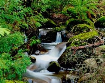 Taggerty Falls