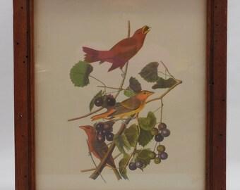 SALE!!  Audubon Print 1950's Nice Frame!!