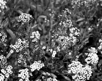 Children Of Spring - Flora Series