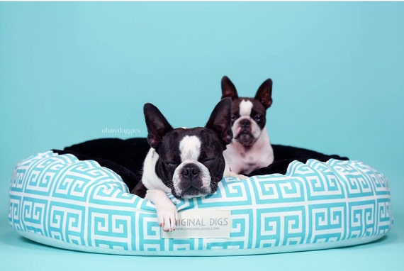 blue printed dog bed