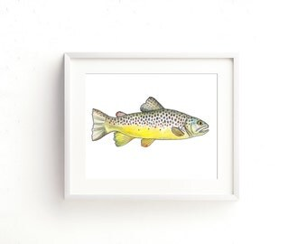 Brown Trout Watercolor Fine Art Print