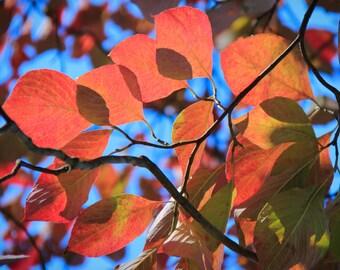 Fall Colors in Matthews