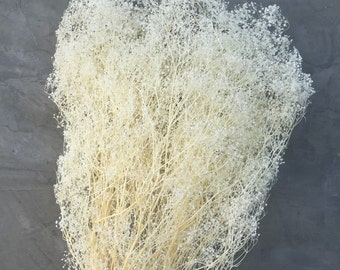 "Dried Baby's Breath, Dried Gypsophila, Dried Flowers, Wedding flowers, Home decor 22"" tall"