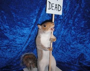 I,M dead taxidermy squirrel. Free shipping