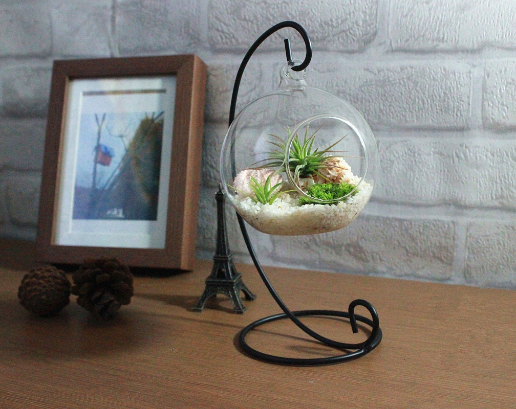 home decoration office desk decor terrarium kit with quartz sand 2 air plants green moss sea - Office Desk Decor