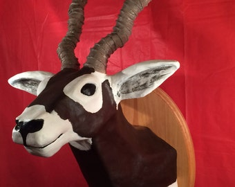 Vincent the Blackbuck Antelope - Faux Taxidermy Mount