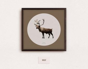 Caribou (Rangifer tarandus) - zoological illustration, vintage style, scientific drawing