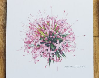 Pink Allium greetings card