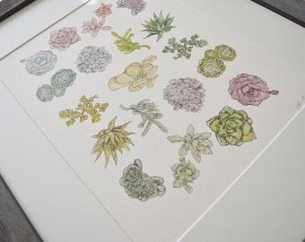 Succulent Study Watercolor Print