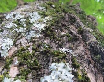 I'm lichen the moss
