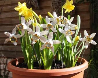 Handpainted Narcissus Sculptures AR001
