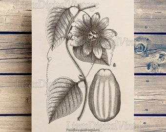 Wall art decor, Passion flower, Wall art prints, Passiflora, Vintage botanical art, Download, 8x10 printable,  11x14 printable, A3, JPG PNG
