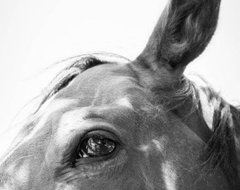 Horse, Instant Download, Black & White, Animal Photography