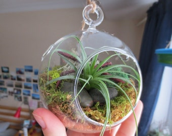 Hanging Air Plant Terrarium Kit