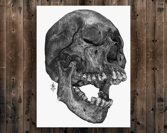 CRANE ||Art Print||