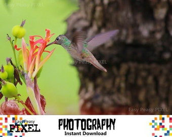 PHOTOGRAPHY, Hummingbird, PRINTABLE ART, Photography Download, Digital Art, Instant Download, Poster, Home Decor, Wall Decor