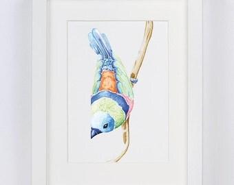 Finch // Watercolour Print