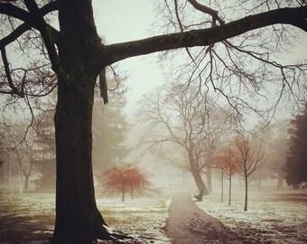 Foggy Day in Blackstone Park