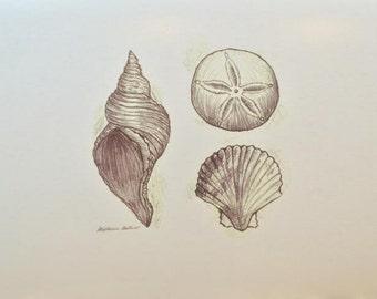 Seashell Drawing Print