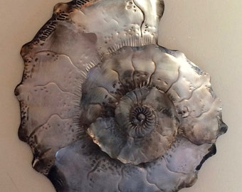 Large Ammonite