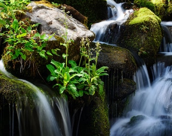 Spring Cascade in the Great Smokey Mountains