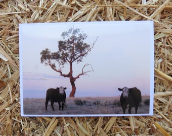 Two Cows at Sunset.  (card)