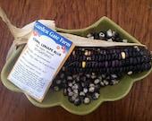 CORN SEED - Lenape Blue Corn