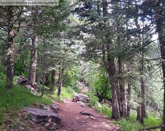 Mountain Trail Photograph Digital Download