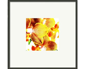 Botanical Series, Love of Orchid, Phalaenopsis, Print