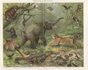 Color printing, lithographic print, art print animals, antiquarian wall chart, Illustration, antique lithography
