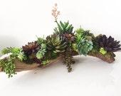 Succulent Arrangement, Artificial Succulent Centerpiece on Driftwood Rustic Home and Garden