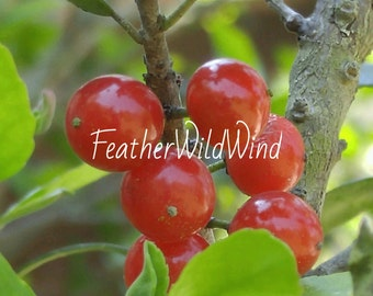 Red Berries Photo Pack - Digital Download