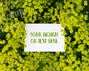 White Card on Yellow Flowers / Stock Photography / Product Mockup / High Res File