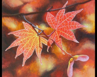 Fine Art Print Greeting Card - Japanese Maple Leaves