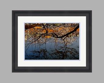 Custom framed 18x12 inch Blossoms