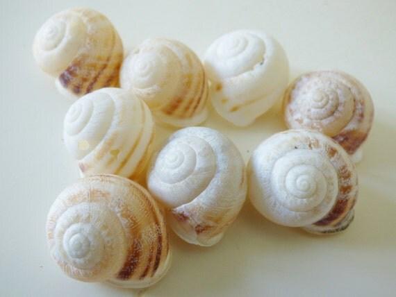 Gros coquillages escargots de mer d coration naturelle - Decoration coquillage mer ...