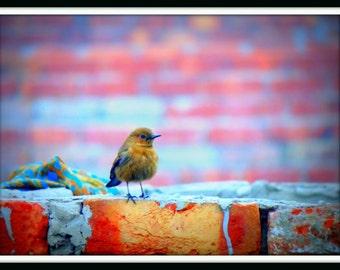 bird photography,fine art photography,nature print,original print,wall art,home decor,cute print,adorable birdie,gift ideas
