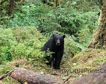 Bear in the Woods Alaska Nature Photography Prints