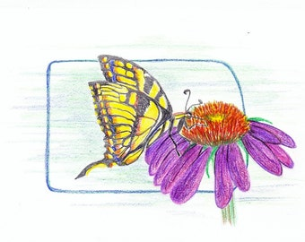 Butterfly with Cone Flower