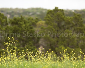 Spring Digital Background - Spring Yellow