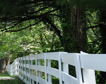 White Fence Along Trees