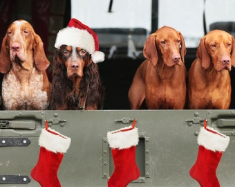 Pack Of Five Dog Lovers Christmas Cards