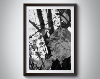 Autumn Leaf Black and White ~ A3 29.7 x 42.0cm or A4 21.0 x 29.7cm Print ~ Available as print only