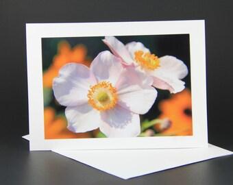 Sisters, anemones, flowers
