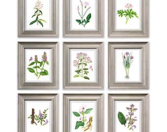 Flowers Botanical print illustration botanical art poster plants print wall art decor kitchen home decor pink green art  SET of 9