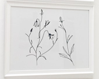 Campanula Rotundifolia Framed Print