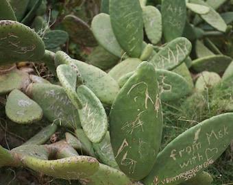 Cactus Love - photograph of Olivier Vanhoeydonck