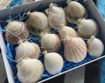 Set of 12 Natural Ribbed Ark Seashell Ornaments
